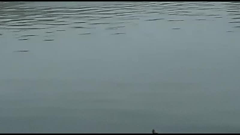 Сброс в реку Белая со стороны белых морей БСК. 19.11.2019
