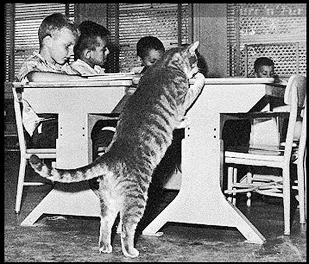 Удивительная история о коте, который стал настоящей легендой...