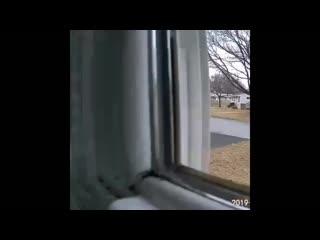 Когда дома никого нет, а камера среагировала на движение