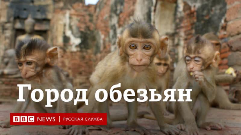 Как обезьяны захватили город в Таиланде из за карантина