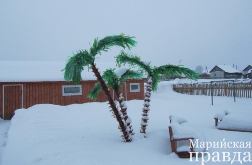 Прогноз погоды на предстоящую зиму в Марий Эл дали… грызуны