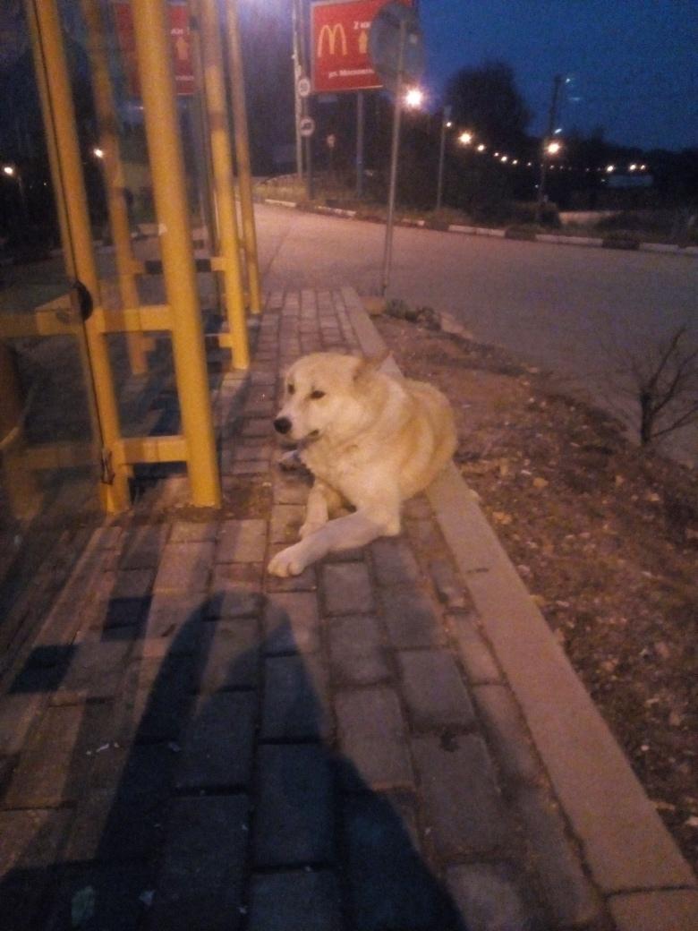 Никто не терял собаку? Почти месяц на