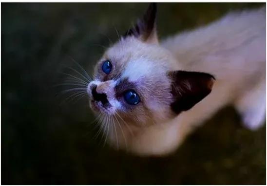 КОТЕНОК ИЗ КАНАВЫ Из канавы на неё смотрели глаза... Они принадлежали маленькому котенку, который, покорившись судьбе, сидел в грязной канавке и никуда не собирался убегать. Танюшка торопилась