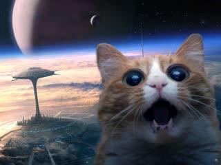 Секретные территории. Шпионы из космоса. Кошачья раса.