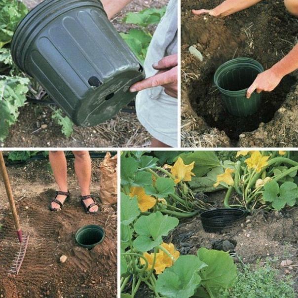 Новый взгляд на полив . Растения с длинными корнями, уходящими глубоко в почву, очень часто недополучают влагу даже при обильном поливе. Но это легко исправить, если прикопать рядом с такими