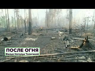 После огня. Фильм-расследование о причинах аномальных пожаров в сибирской тайге   ROMB
