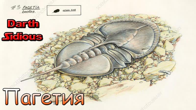 Развитие жизни на Земле The Evolution of Life Пагетия Pagetia