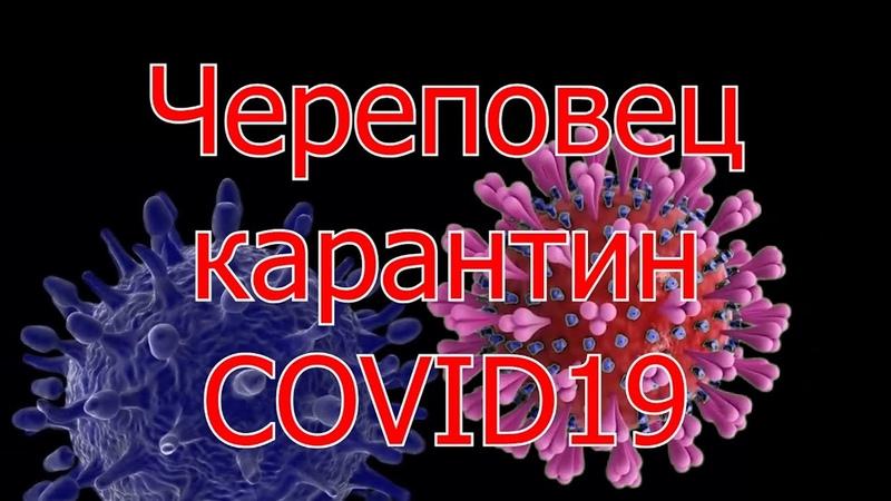 Череповец карантин COVID 19 31 03 2020