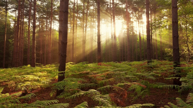 Соловей в лесу Соловей поёт лес шумит Звуки природы Пение птиц