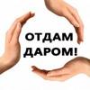 Отдам даром Ульяновск Хайп