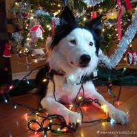 Собака - друг человека | ВКонтакте