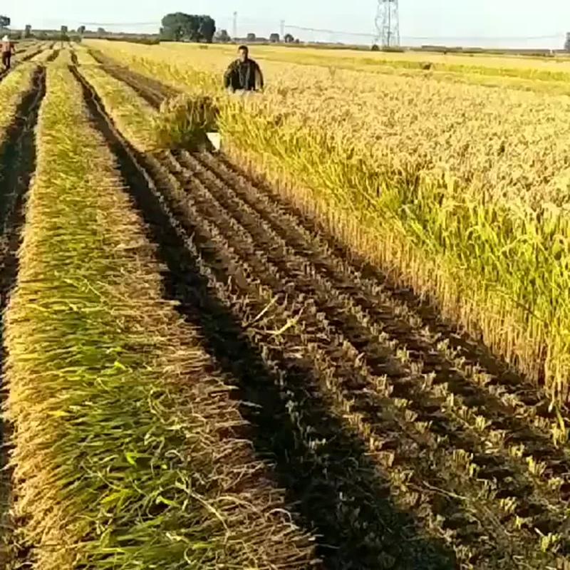 Уборка урожая. И комбайн не нужен - vk.com/my.dacha