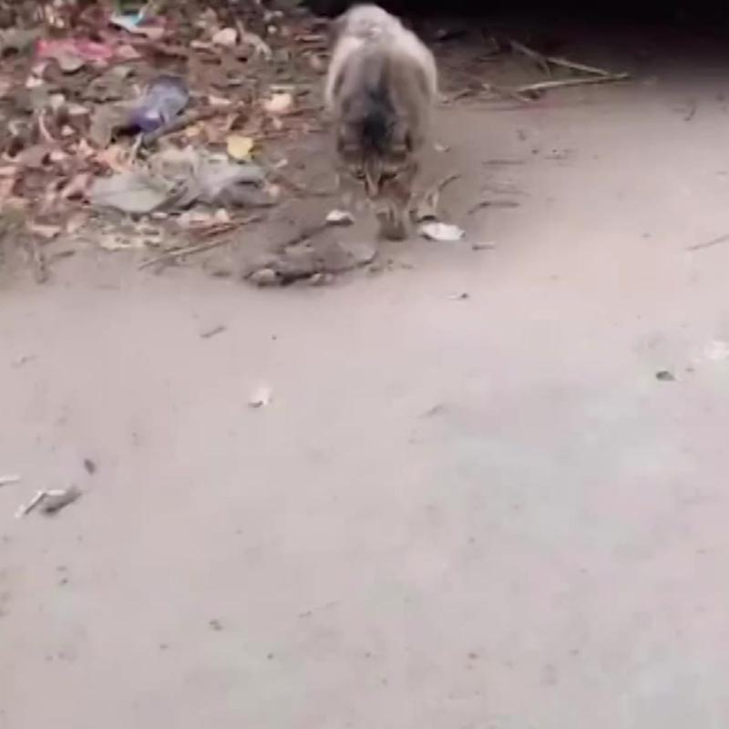 Мама-кошка кормит своего ребенка мяском