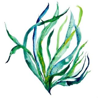 underwater painting seaweed - 736×736