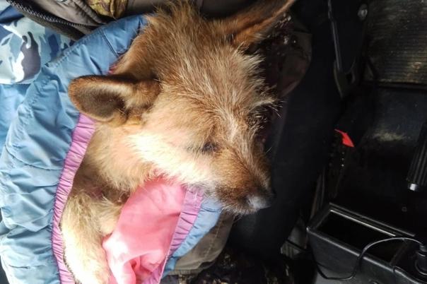 Житель Асбеста выкинул из окна свою собаку Сотрудн...