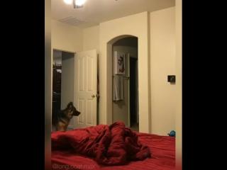 Играет в прятки с собакой