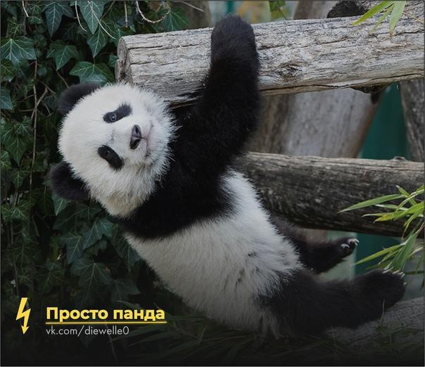 Просто милая панда нашла приключение. И ты найди ^^