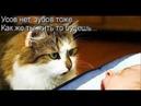 Веселые картинки. Смешные коты с надписями до слез.