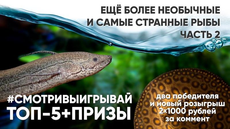 Самые необычные аквариумные рыбы. Часть 2. смотривыигрывай
