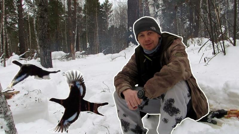 Где искать лунки тетерева, как охотиться на тетерева зимой. Охота на лунках в вопросах и ответах.