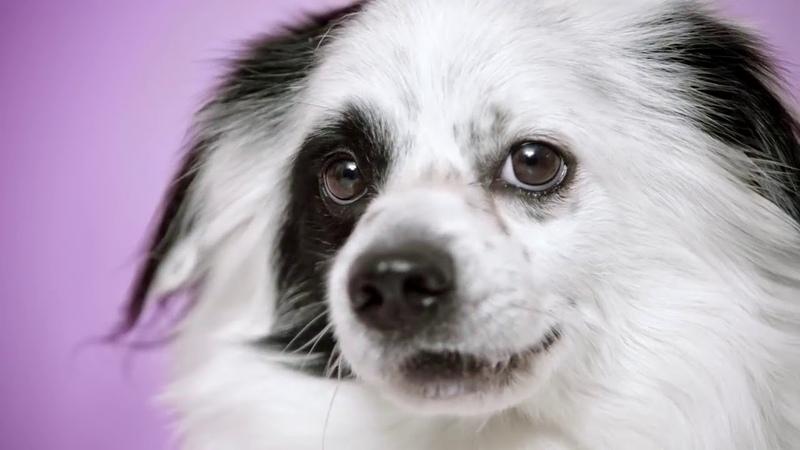 Munich Animal Shelter Adoptify Moshi