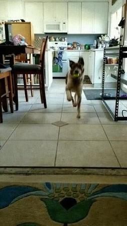 Hello my doggy
