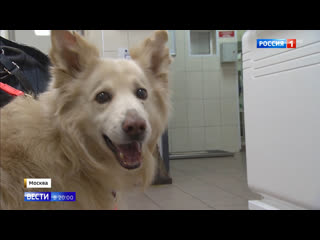 Ждут хозяев из больницы и гуляют с волонтерами: кошки и собаки тоже страдают во время пандемии