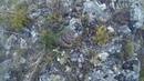 Встретил щитомордника в районе бухты Ая, Байкал