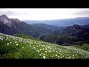 Best Relaxing Videos | The Mountain Flowers | Relaxing sounds of nature | Meditation | Relax Music