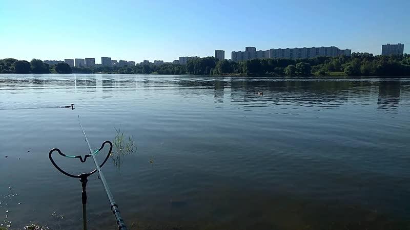 Борисовские пруды, фидер, поймал-отпустил