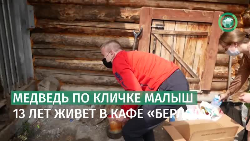 Спор о судьбе медведя из придорожного кафе разгорелся на Урале