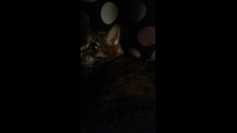 Алиса отжала кровать прогоняю кошку японскими фразами