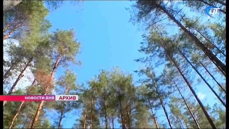 Новгородская прокуратура признала законным возбуждение уголовного дела о превышении должностных полномочий в лесной сфере