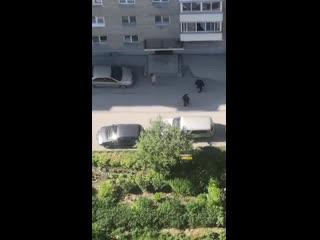 Голый мужчина бегал по двору на улице Сибиряков-Гвардейцев
