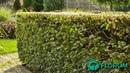 Welke erfafscheiding ga jij gebruiken in je tuin Bekijk alle mogelijkheden!